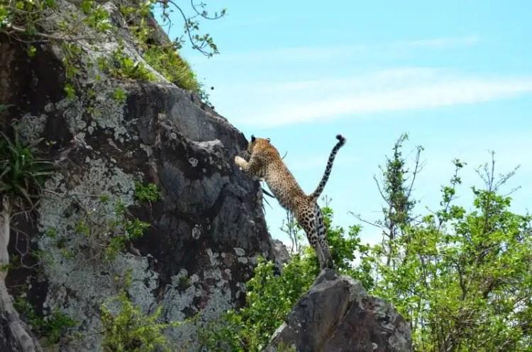 Serengeti - Tanzania