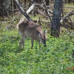 Shenandoah National Park - Virginia, Usa