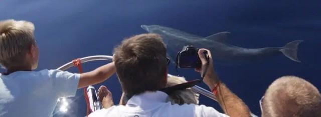 Delfini, Ente Progetto Natura - Sardegna, Italy