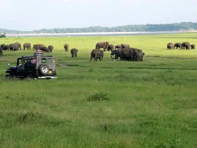 Kaudulla National Park - Sri Lanka