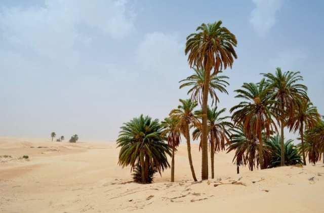 Sahara - Tunisia