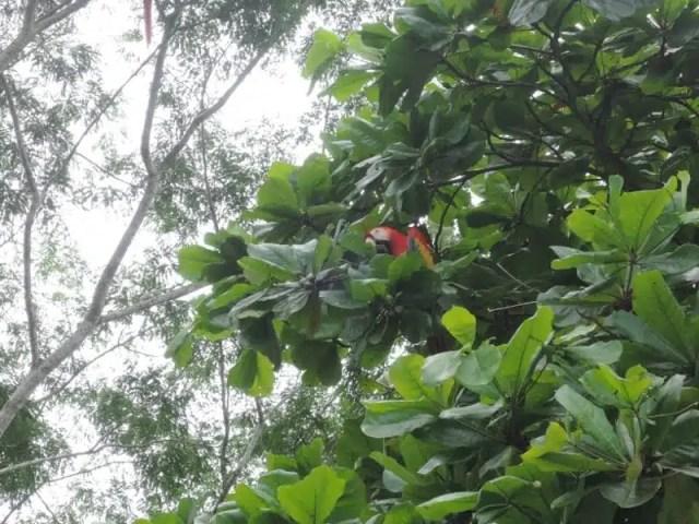 Parco Nazionale Corcovado - Costa Rica