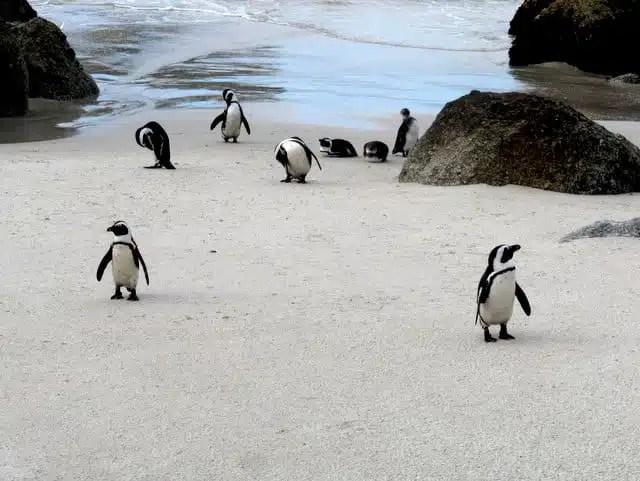 Boulders Beach, Sudafrica
