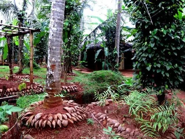 Centro ayurvedico - Sri Lanka