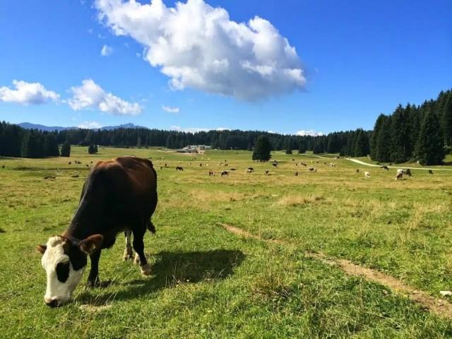 Malga Millegrobbe - Folgaria, Trentino, Italia