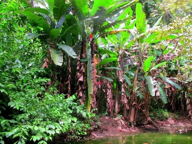 Foresta - Costa Rica