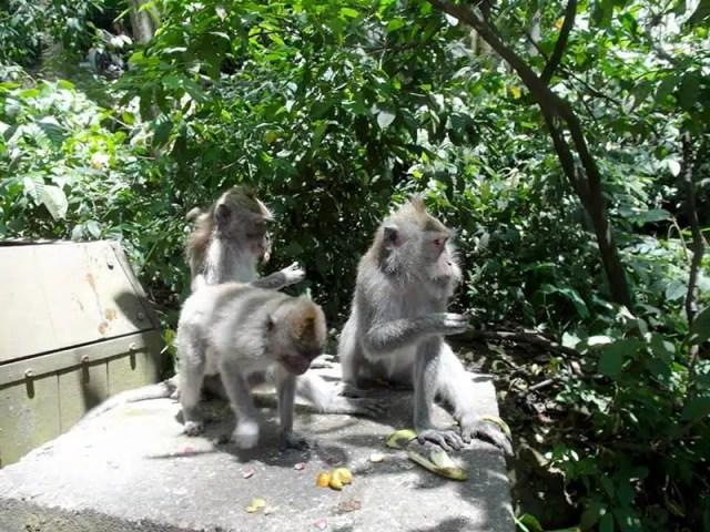 Foresta delle Scimmie - Bali, Indonesia
