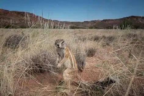 7MML - Namibia
