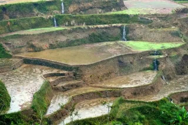 Le terrazze di riso di Banaue