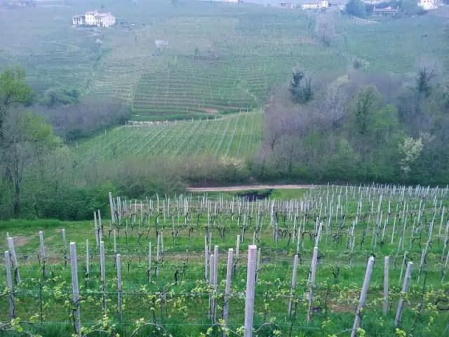 Conegliano Veneto, Italia