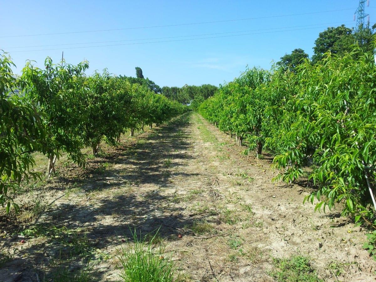 Emilia Romagna coltivazioni naturali