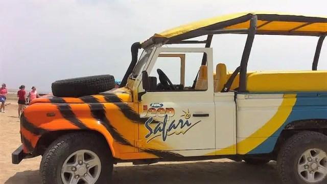 Safari ad Aruba