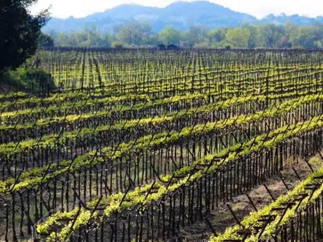 California: Festival e concerti dedicati al vino