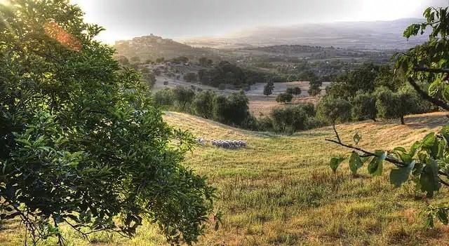 Montemerano - Maremma Toscana