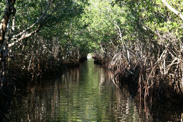 Everglades, Florida, USA