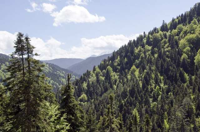 I boschi della valle dell'Aspropotamos - Timiou Stavrou, Grecia