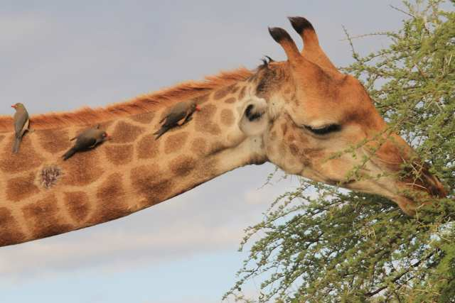 Kruger National Park - Sudafrica