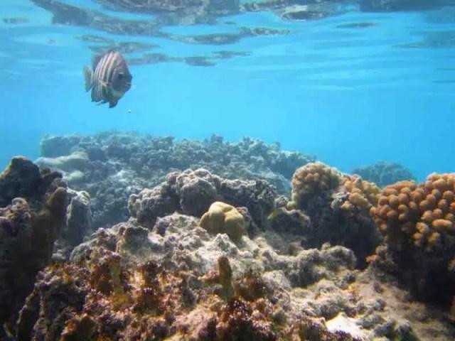Moorea, Polinesia Francese