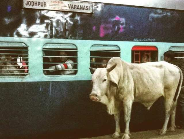 India - Viaggio senza meta