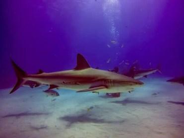 Viaggio alle Bahamas (foto di Devid Rotasperti)