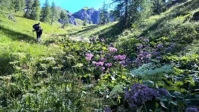 Escursione sulle Alpi Carniche