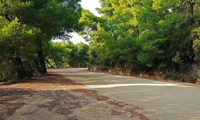 1-strada-sterrata-circondata-da-pinete-e-macchia-mediterranea