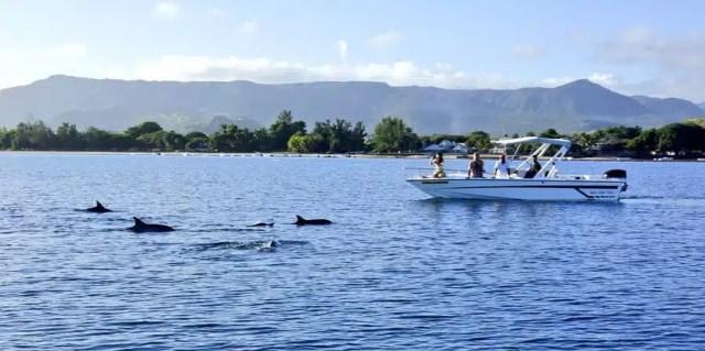 A Mauritius con i delfini