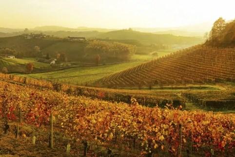 langhe-vineyard-at-sunset-piedmont-italy