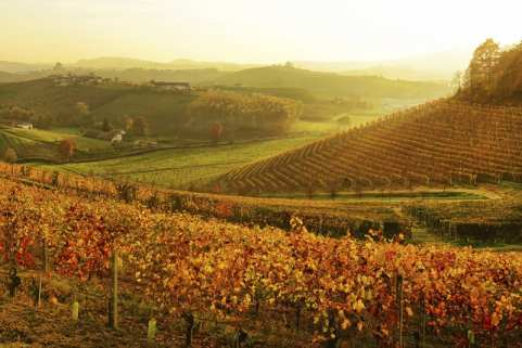 langhe-vineyard-at-sunset-piedmont-italy