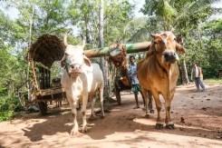 Uno dei mezzi di trasporto dello Sri Lanka