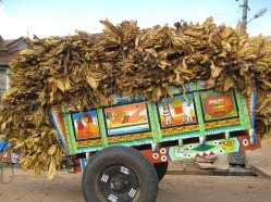 3 India rurale (48)