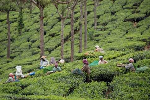 3 Munnar piantagioni di tè (7)