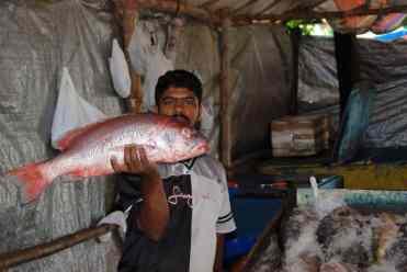 6 Kochi pescatori (2)