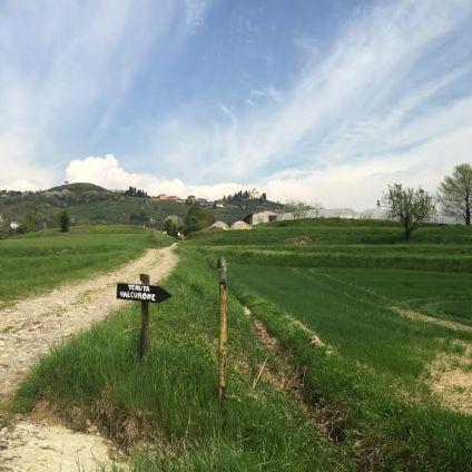 Tenuta-Val-Curone