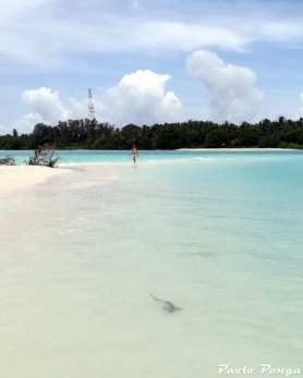 isola deserta e squaletto