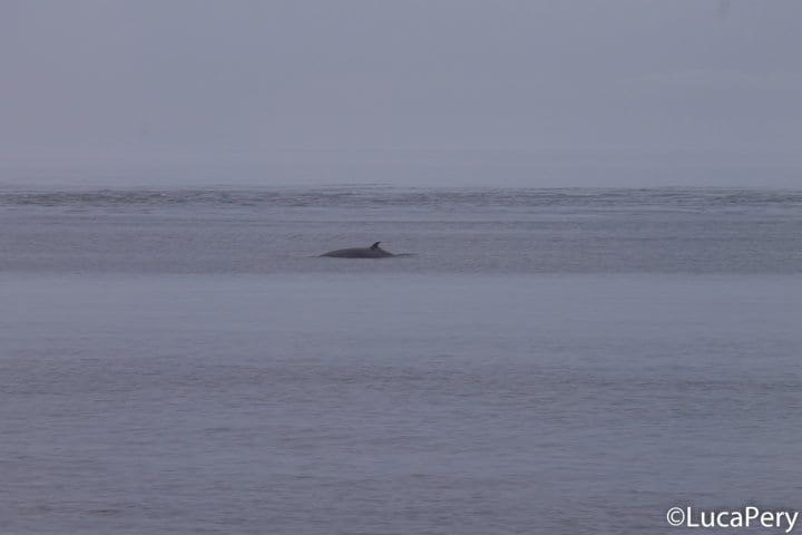 Come vedere le balene a Tadoussac, nel Canada Occidentale