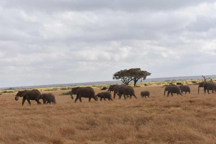 l'Amboseli National Park