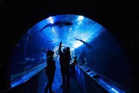 musei di San Francisco-aquarium-of-the-bay