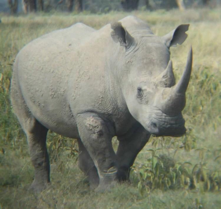 Lake Nakuru rinoceronte