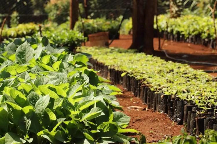 piantagione Treedom