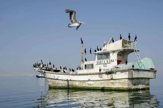 Ballestas barca