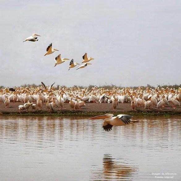 Djoudj National Bird Sanctuary Senegal