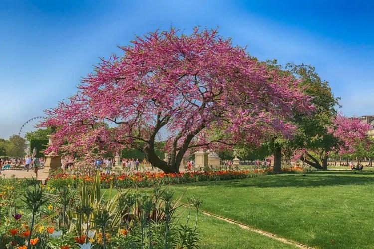 Giardini di Tuileries a Parigi