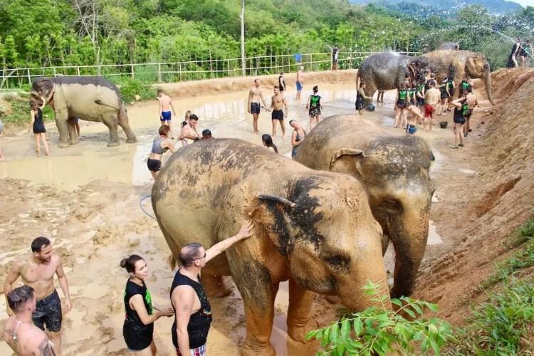 santuario elefanti thailandia