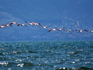 Ο Πτηνολογικός Σύνδεσμος καλεί το κοινό στη Γιορτή των Πουλιών στις 2 Οκτωβρίου