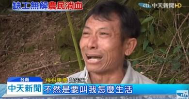 (影)農民哭了!政府聽見了嗎?4甲大椪柑園找嘸人採 滿地落果損失近百萬