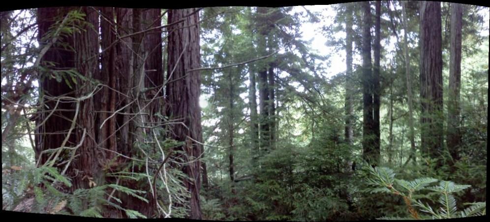 redwood stand 2