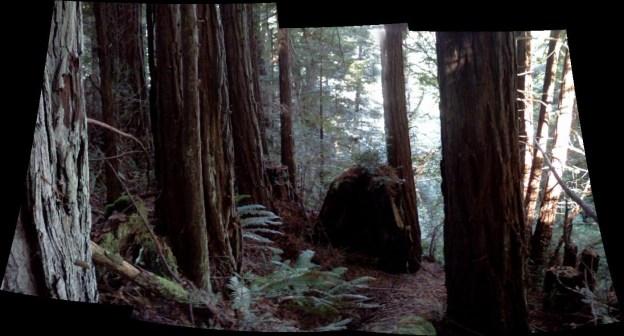 redwood stand 3