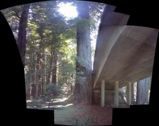 og redwood and bridge