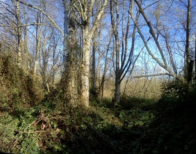 Elk River bottoms 5